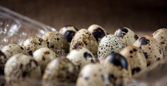 Quail Eggs: A Complete Source of Nutrition for Your Dog