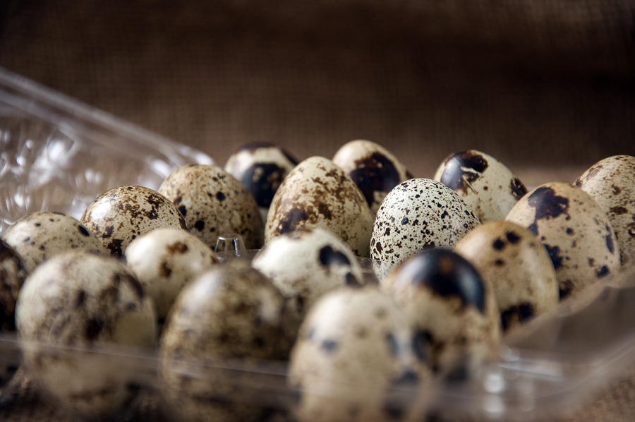 Quail Eggs A Complete Source Of Nutrition For Your Dog