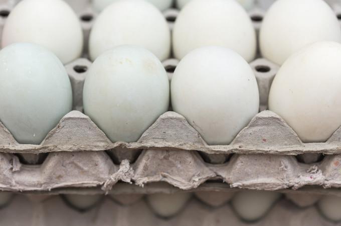 raw duck eggs