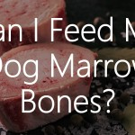 Can I Feed My Dog Marrow Bones?