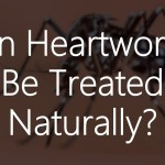 Can Heartworms Be Treated Naturally?