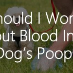 Blood In Dogs Poop
