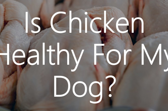 Is Chicken Healthy For My Dog