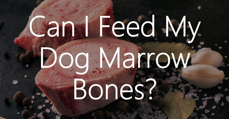 Can I Feed My Dog Raw Beef Marrow Bones